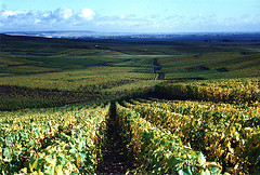 Vineyards in France by crabchick, on Flickr